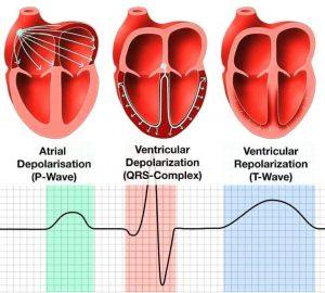 رابطه برق طبیعی قلب و گردش خون